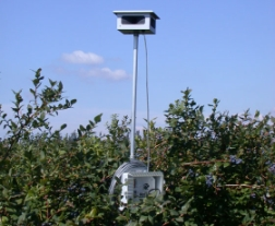 An audible bird scarer sticking out over vegetation.