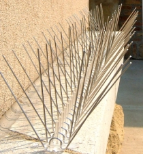 A row of bird spikes installed on a ledge.