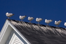 Seagulls perching on the top of a roof.